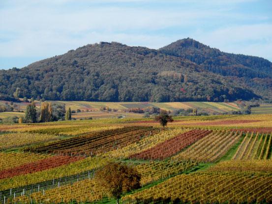 Herbst an der Südlichen Weinstraße