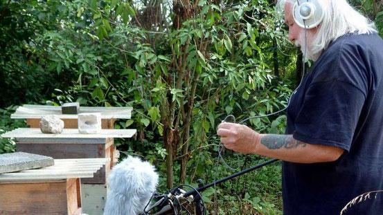 """Das Summen der Bienen ist eines der vielen Naturgeräusche, die Bernd-Michael Land in seinem Projekt """"Rodgau Field"""" verarbeitet. © Karin Wagner"""