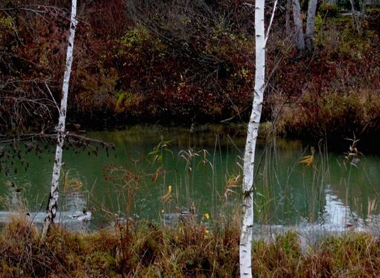 Herbststimmung am Marchfeldkanal (Foto: Herma Exner)