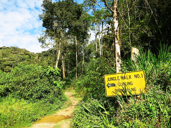 Jungle Walk No. 1 zum Gunung Brinchang