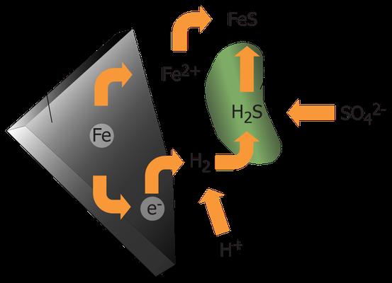 Anaerobe Bakterien, deren archaischer Stoffwechsel Eisen und Schwefel einbezieht, existieren noch heute – Stoffwechselprodukt: Eisensulfid.