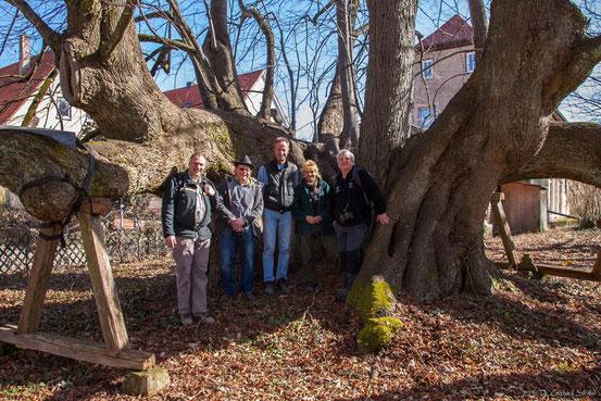 Gruppenbild mit ur-uralter Linde im Schloßpark der Barone vom Holtz
