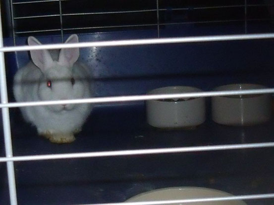 Kaninchen im dunklen Keller