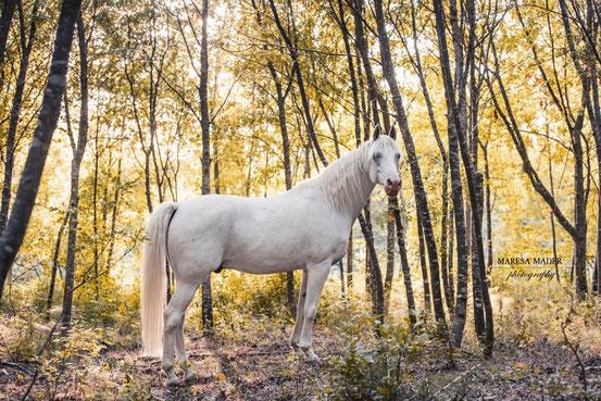 Clickertraining: lerne dein Pferd zu beobachten