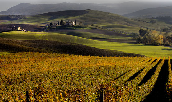 Delphicaphoto - Sunset over the hills and vineyards of the Chianti Senese in autumn