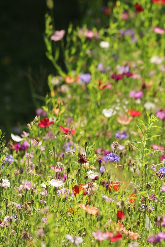 Les jardins du château d'Azay-le-Rideau | Touraine | Val de Loire ©Emilie Boillot