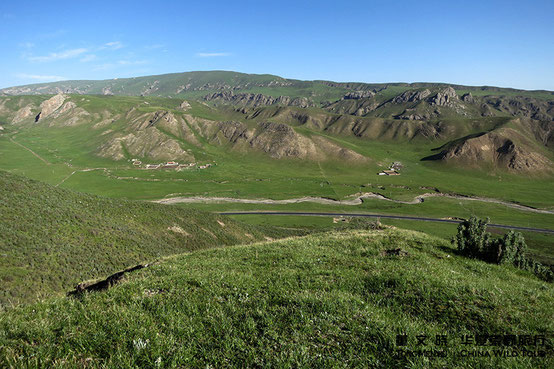Rubber Hill, Qinghai