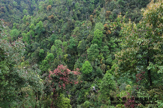 Nanling Forest Park