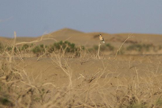 塔里木沙漠 ©  董文晓/华夏荒野旅行