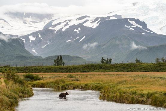 Alaska fotografieren Katmai Nationalpark