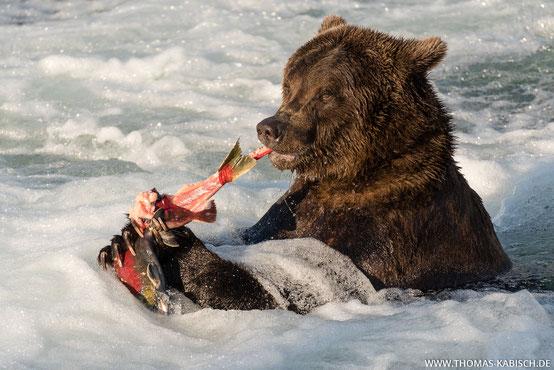 Bären fotografieren im Brooks River