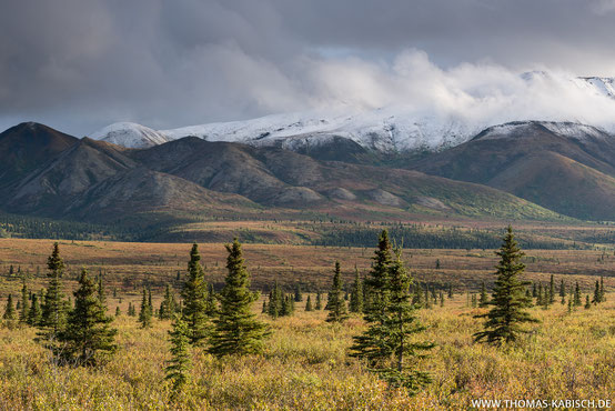Landschaftsfotografie im Denali Nationalpark in Alaska