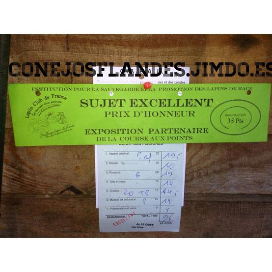 Exposicion de Orthez 2014. Premio a conejo excelente