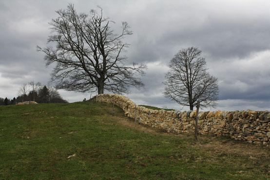 Trockenmauer, Probstenberg