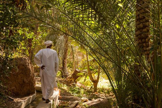 Spaziergang auf einem Bewässerungskanal  durch die Palmengärten im Wadi Tiwi.