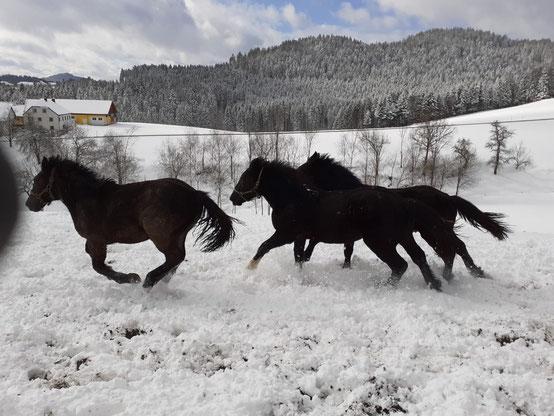 bereits gerettete Pferde