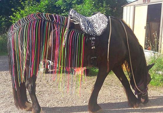 Fliegenschutz, bunt, Pferd, Pony Regenbogen