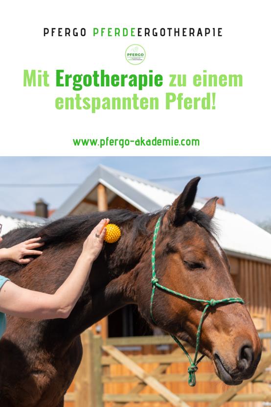 PFERGO Pferdeergotherapie - Ergotherapie für Pferde!