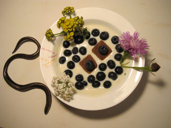 Plate with soy yogurt, blueberries, chickpeas candy, flowers and grass snake.