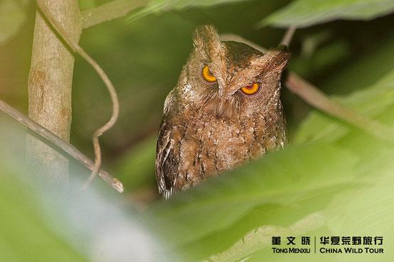 ©董文晓/华夏荒野旅行