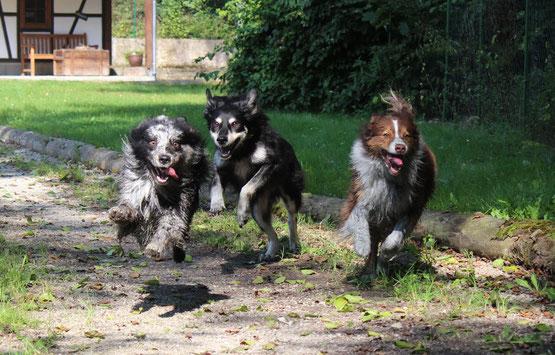 Hundebetreuung stundenweise Schaffhausen
