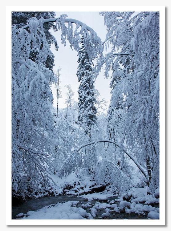 Winter am Tauglbach © c.rebl
