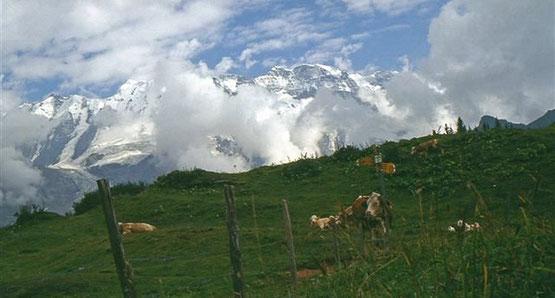 Weitwandern im Berner Oberland auf der Via Alpina: Bärentrek-Hintere Gasse Meiringen - Gstaad