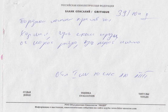 Лутший Юниор, Лутший Представитель Породы CAC Jun эксперт  Харатишвили