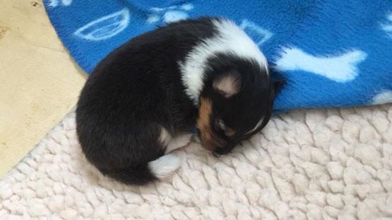 Die kleine Maus 10 Tage alt