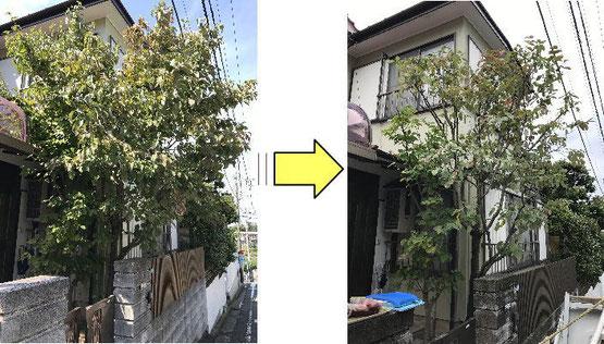 お庭全体のお手入れはもちろん、植木/庭木1本から剪定請負
