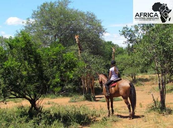 Africa Volunteer Adventures Africa Dream Horse Safari
