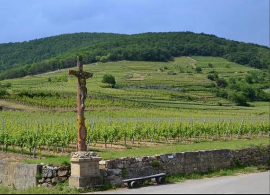 Le Kiremberg de Kientzheim laujourd'hui appelé Kirrenbourg ( lieu-dit du Grand Cru Schlossberg)