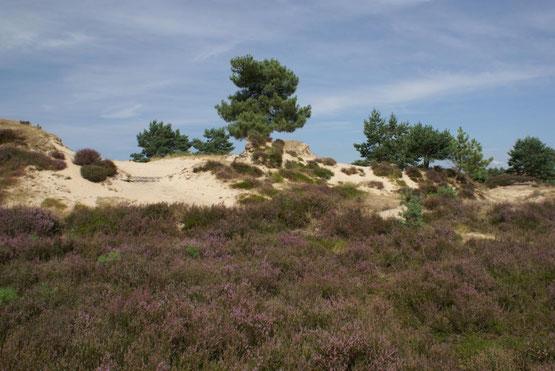 Te huur schitterende vakantiewoning voor 10 personen in Diever in de provincie Drenthe met gratis Wifi, honden toegestaan