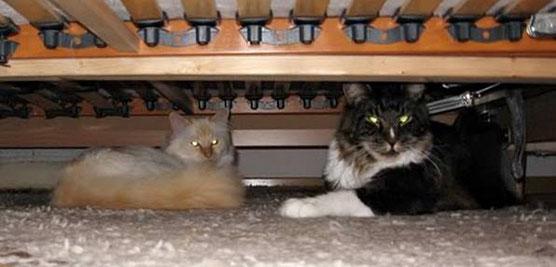 """So sah das dann unter dem Bett aus - Cameo's """"Schicht"""" bei Gizmo."""