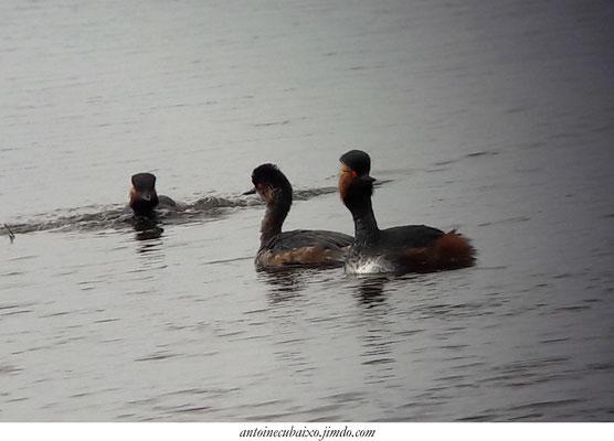 Lac du der oiseaux nature
