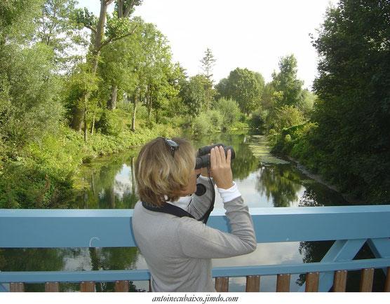 Observer les oiseaux du Grand Reims avec Antoine Cubaixo