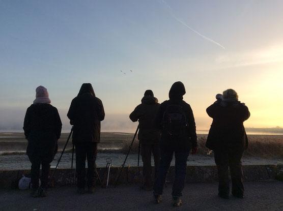 Observateurs d'oiseaux et photographes au Lac du Der (Novembre 2016)