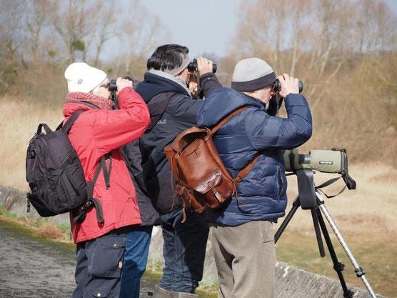 Observer les oiseaux au Lac du Der avec Antoine Cubaixo