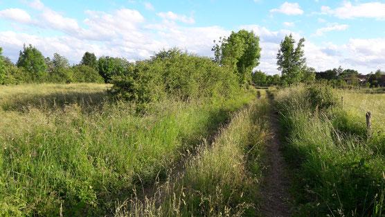 Chemin bocager à Vitry-en-Perthois