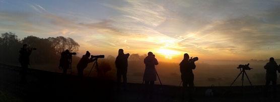 Stage Photo & Ornitho en partenariat avec la  Nikon School au Lac du Der le 22 novembre 2014 pendant le Festival de Montier