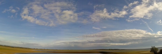 Lac du Der, le jour du record, le 11 novembre 2014