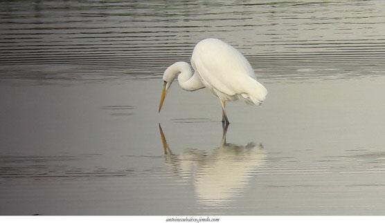 oiseau du lac du der