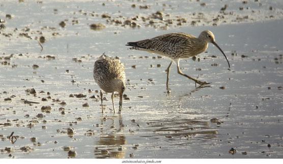 Les oiseaux du Lac du Der