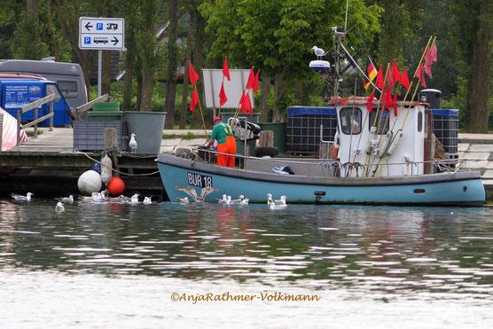 Fischereihafen Burgstaaten, Fehmarn