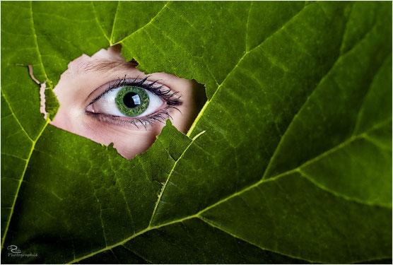 August 2014 - Green Eyes
