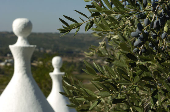trulli  and olive trees apulia