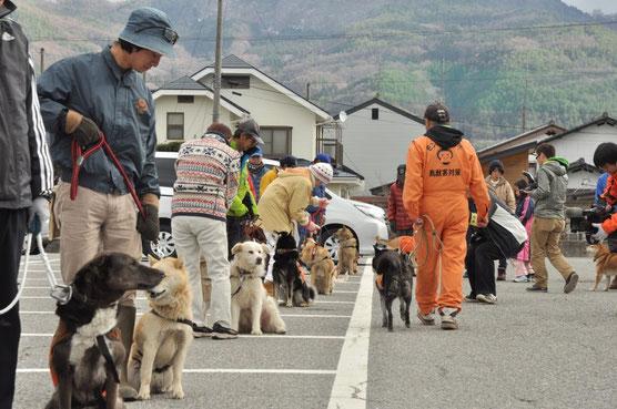 一列に座らせ、他の犬が近くを通っても落ち着きを保たせる訓練