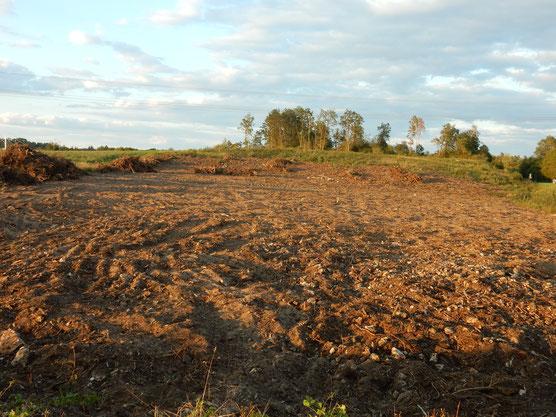 """""""Sandwüste"""". Ehemals ein kartiertes Biotop mit Wäldern, Gebüschen, Trockenrasen, und vielen seltenen Arten.  Foto: Chr. Stierstorfer"""