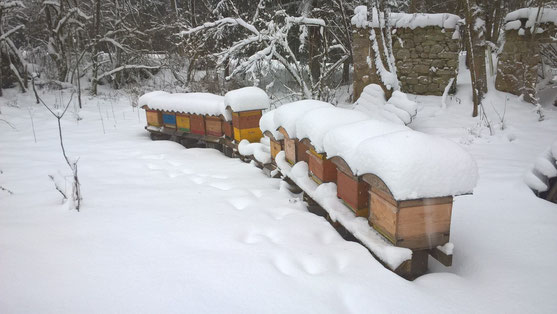 Winterruhe am Bienenstand