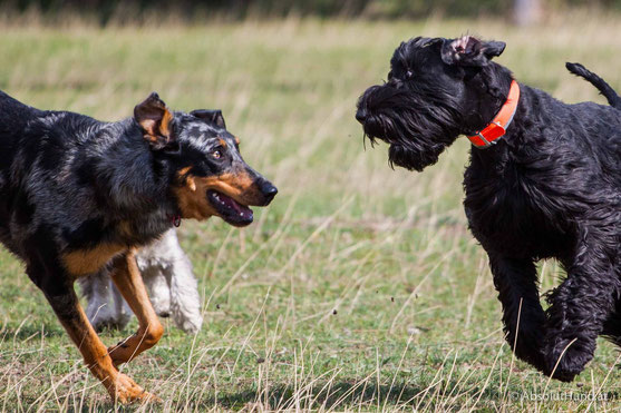 Pollux & Coco beim Welpentreffen, Hund